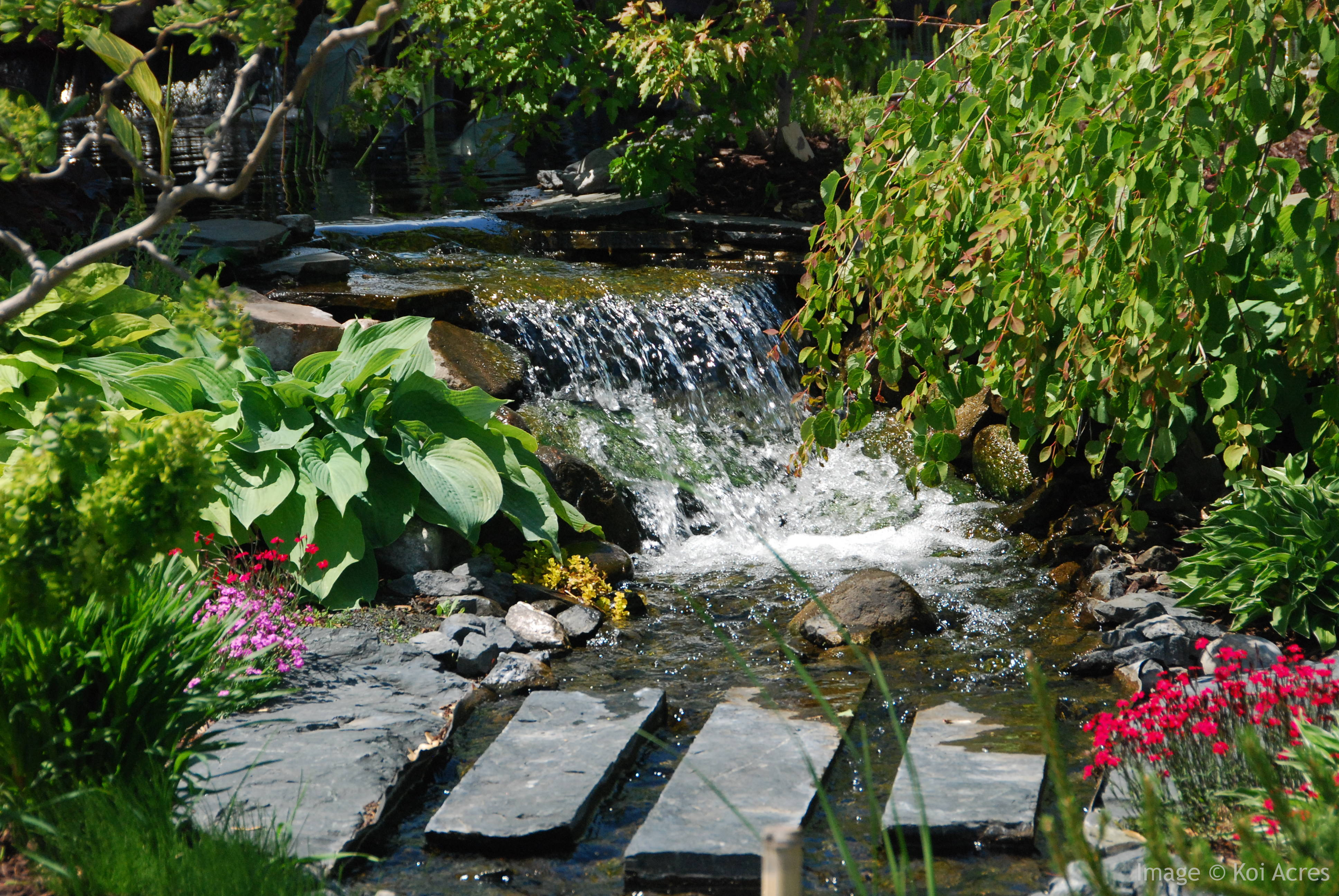 How koi pond filters work for Koi pond water quality